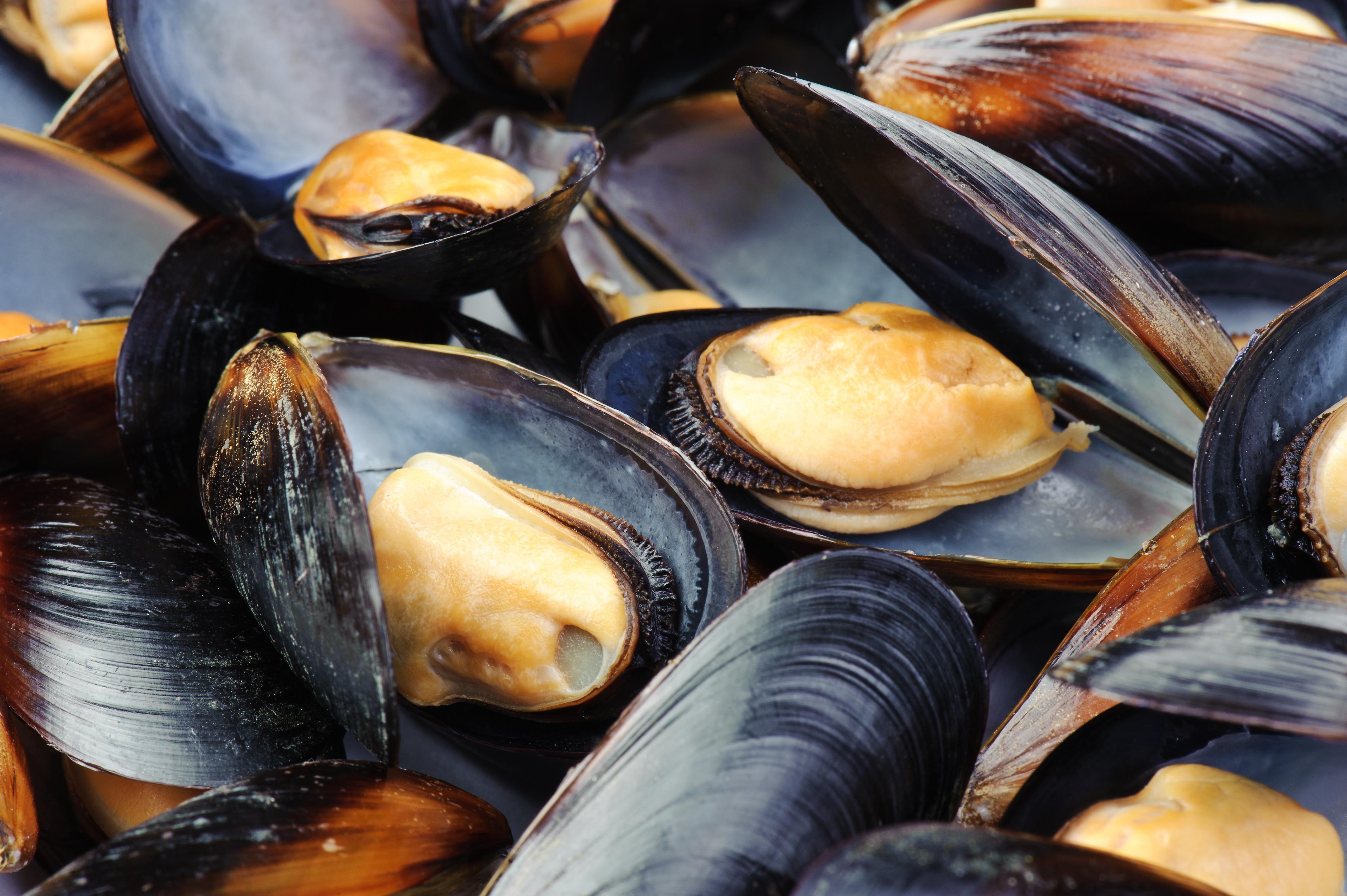 Zeeuwse Mosselen